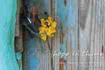 Hope in Thyme